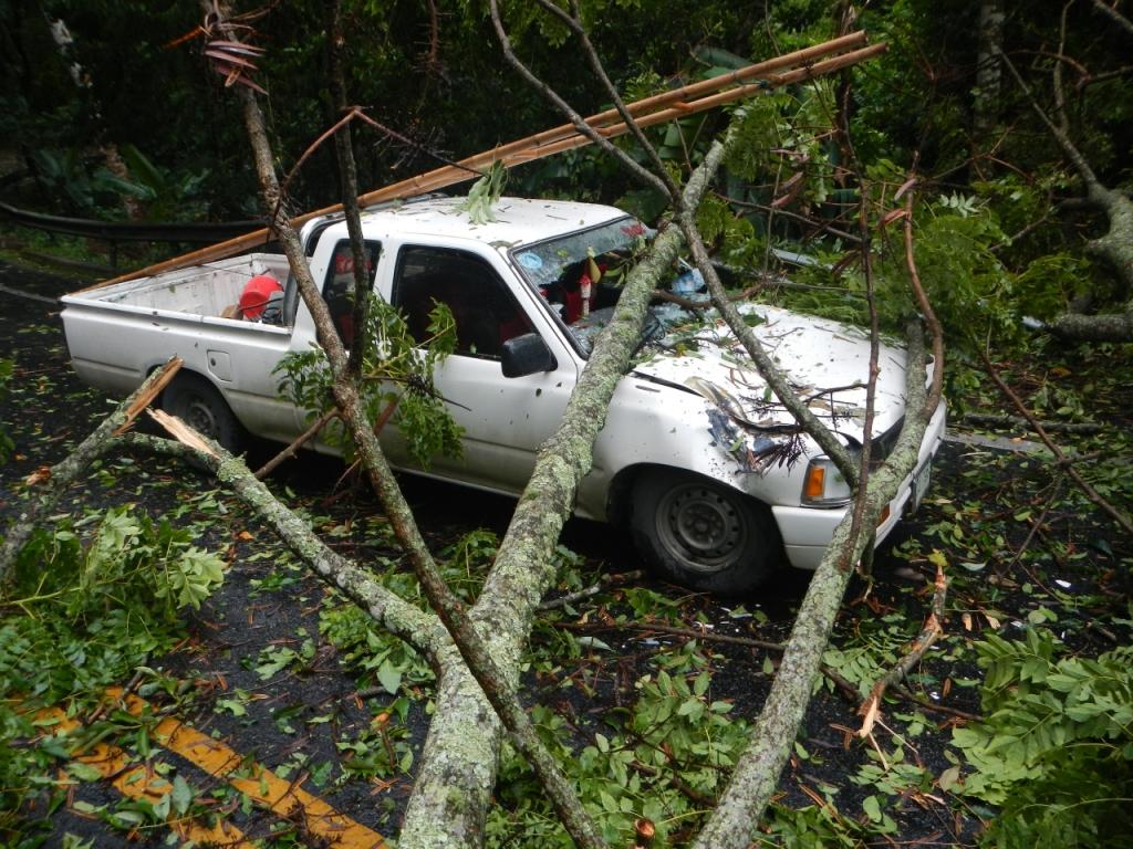 tree fall car oh my